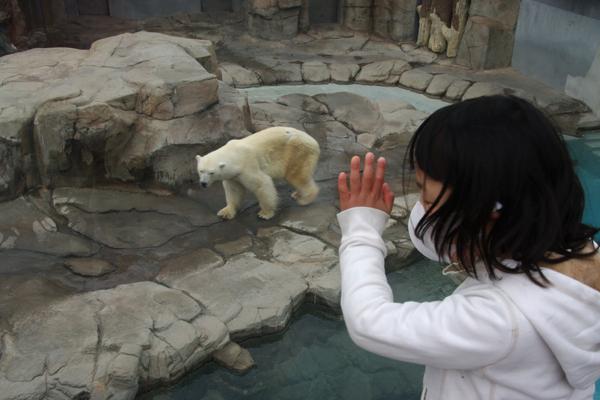 白熊の置物