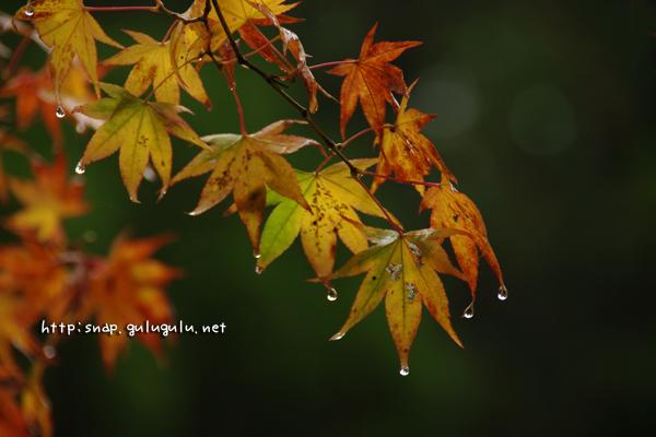 葉のしずく(横)