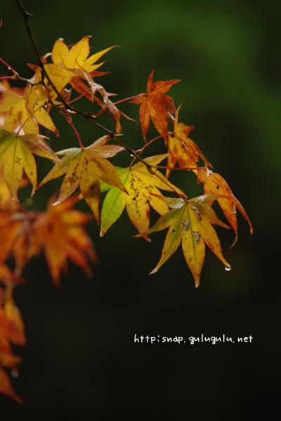 葉のしずく(縦)